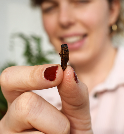 Enjoy the delicate nutty taste of our natural crickets!
