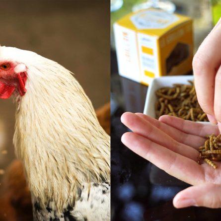 Unterschied zwischen Futter und Lebensmittel